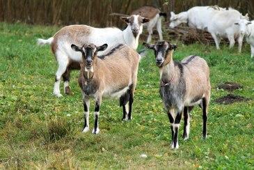 Kozy Joanny