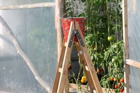 Siedliskowa pomidorlandia